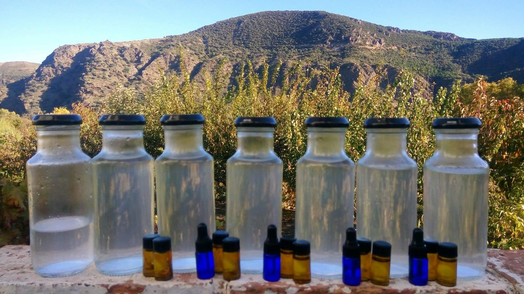 how to distil lavender oil