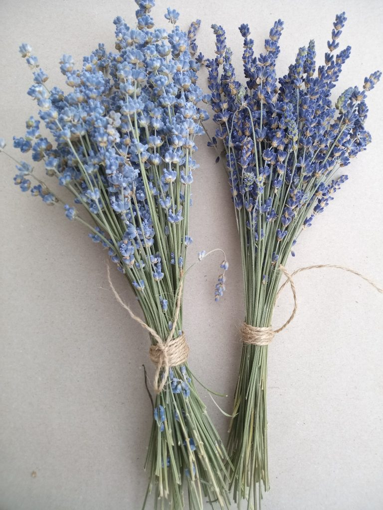 Esssential.blue bunches of lavender angustfolia