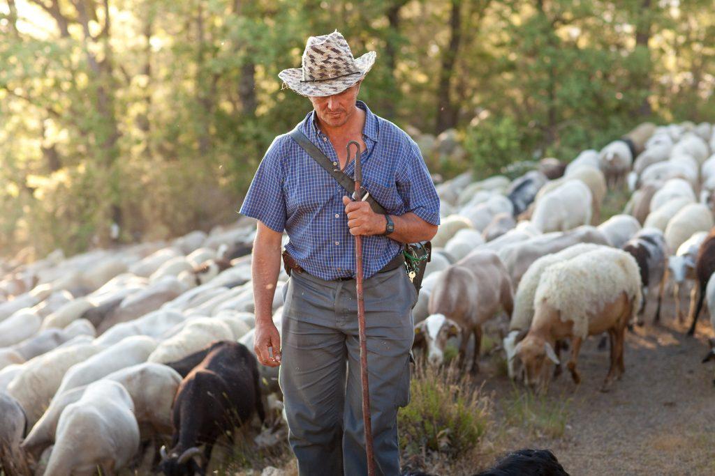 Essential.blue sheep wool