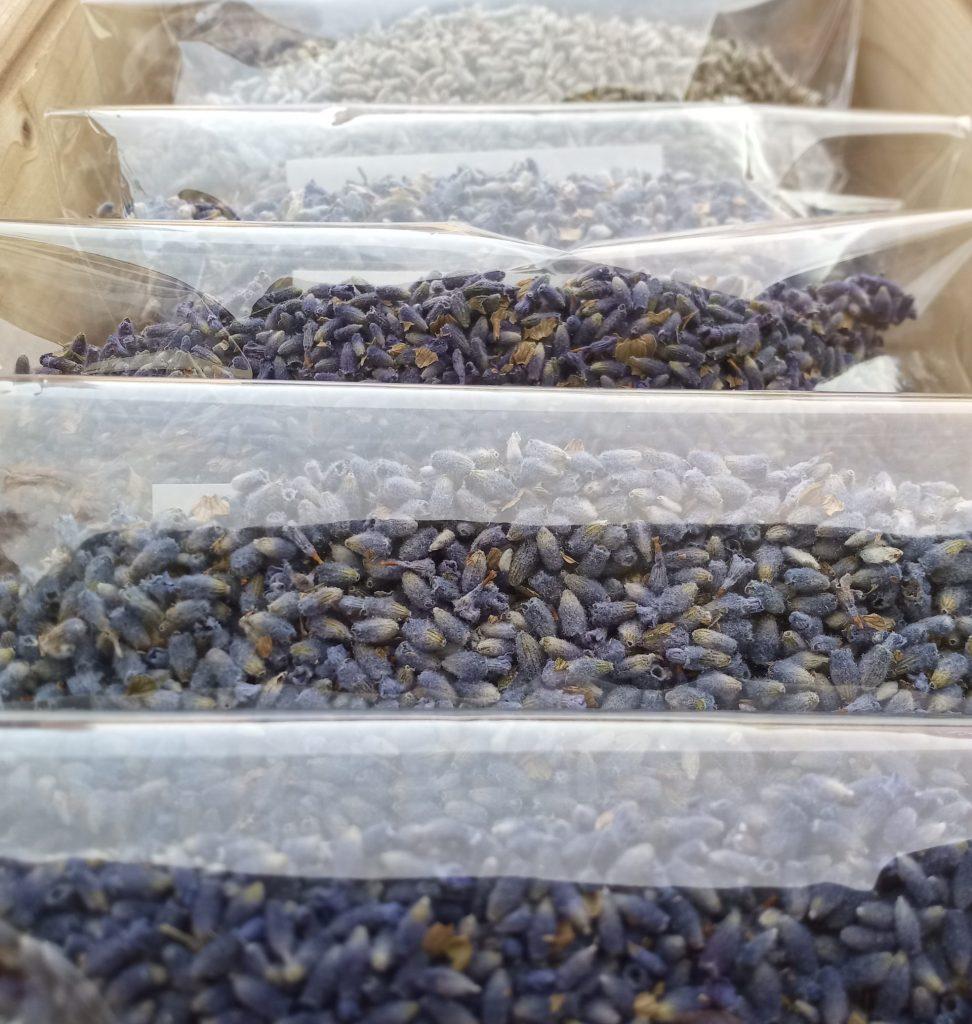 Essential blue dried lavender