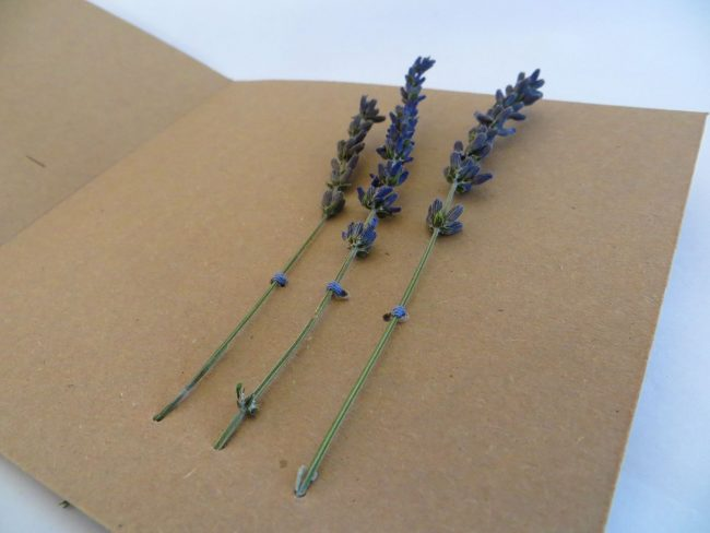 Essential.blue lavender invitation card