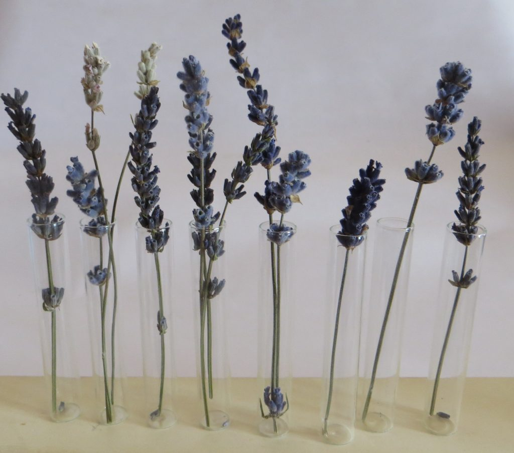 what to do with an everlasting lavender bouquet