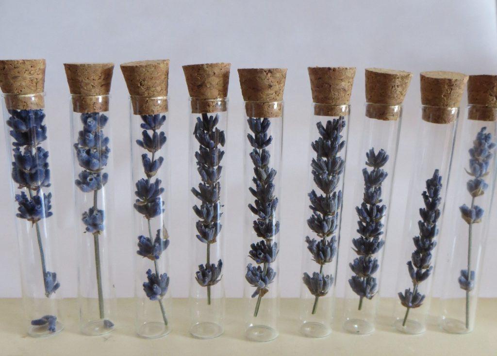 Lavender flowers in glass bottles