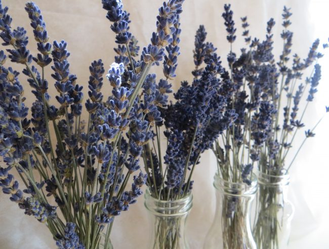 what can you do with an everlasting lavender bouquet?