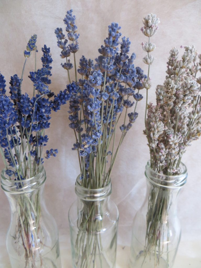everlasting lavender bouquet in three colours