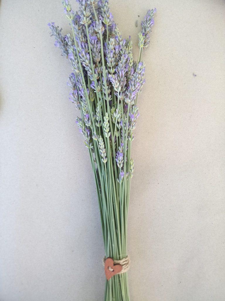 lavandin Provence - Essential.blue