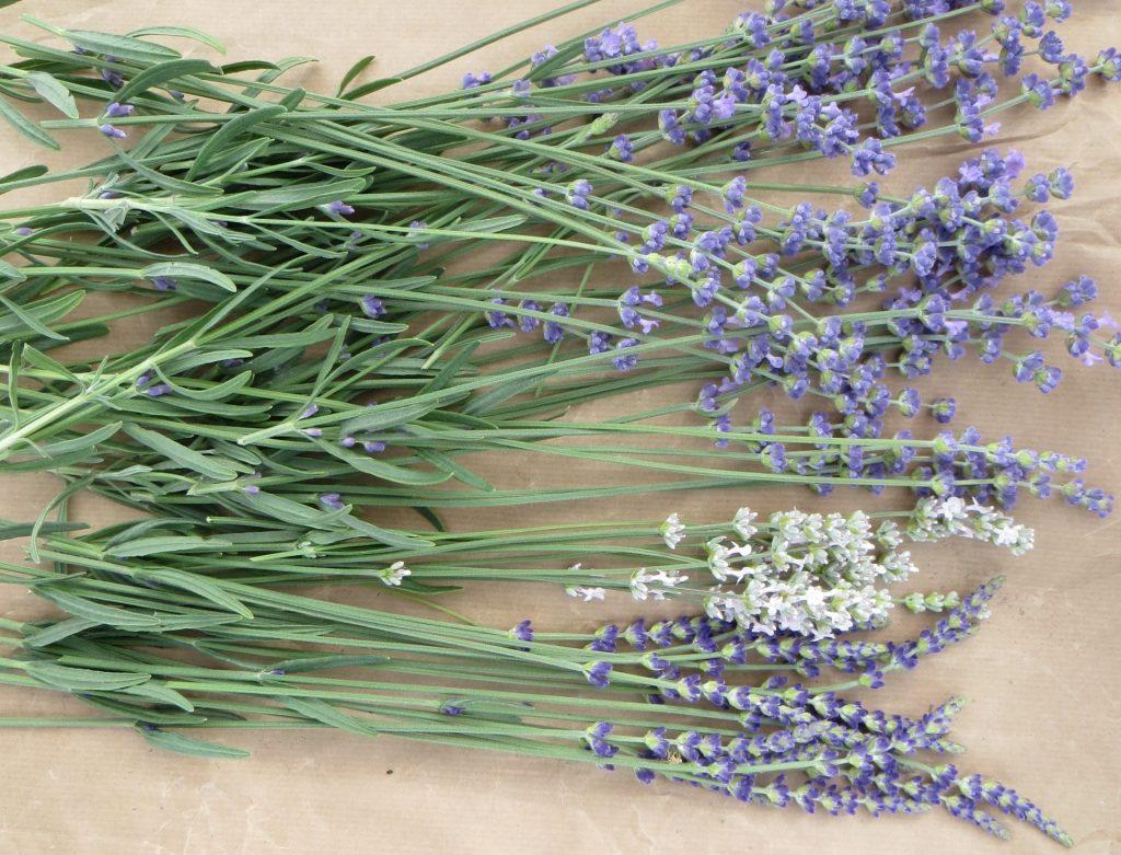 3 colours lavender