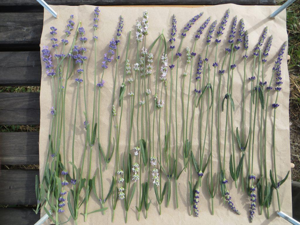 DIY lavender flower press