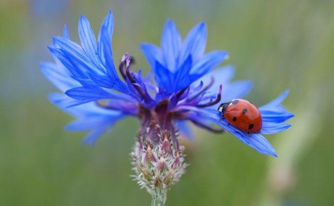 ecological lavender garden