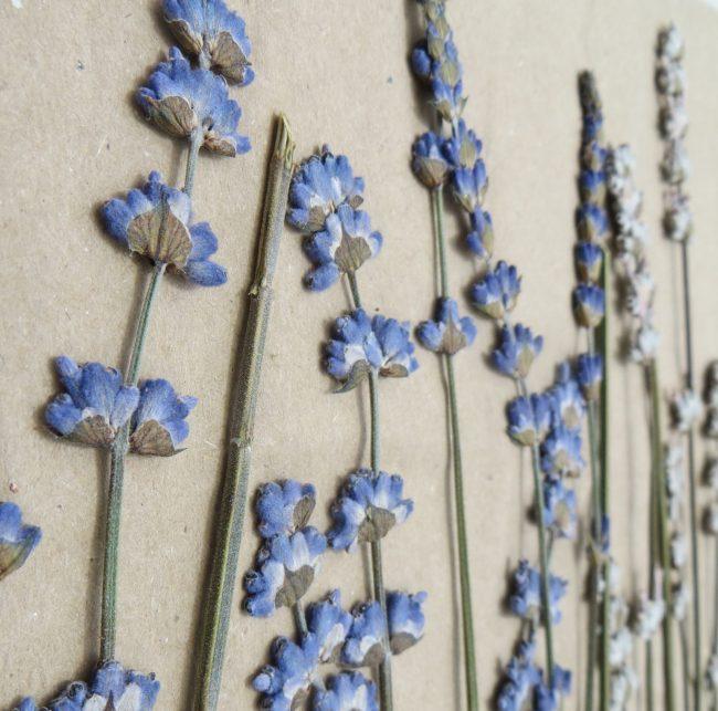 pressed flower essential.blue