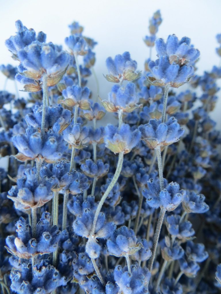 buy a bouquet of lavender Angustfolia