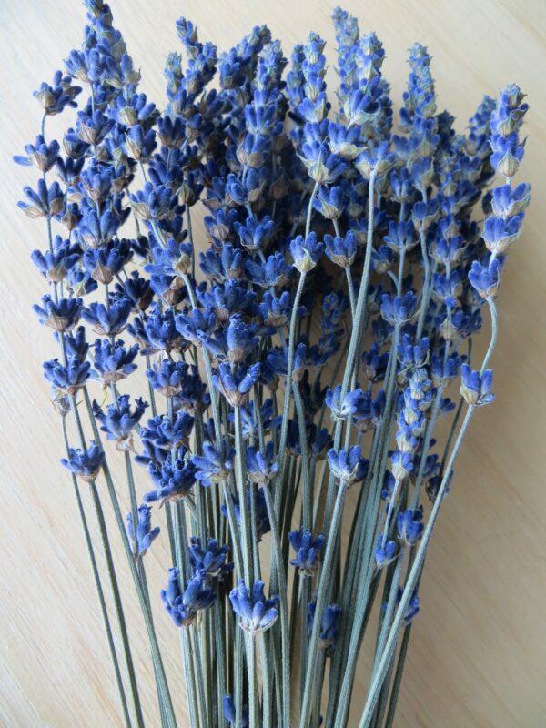 dark blue lavender bouquet