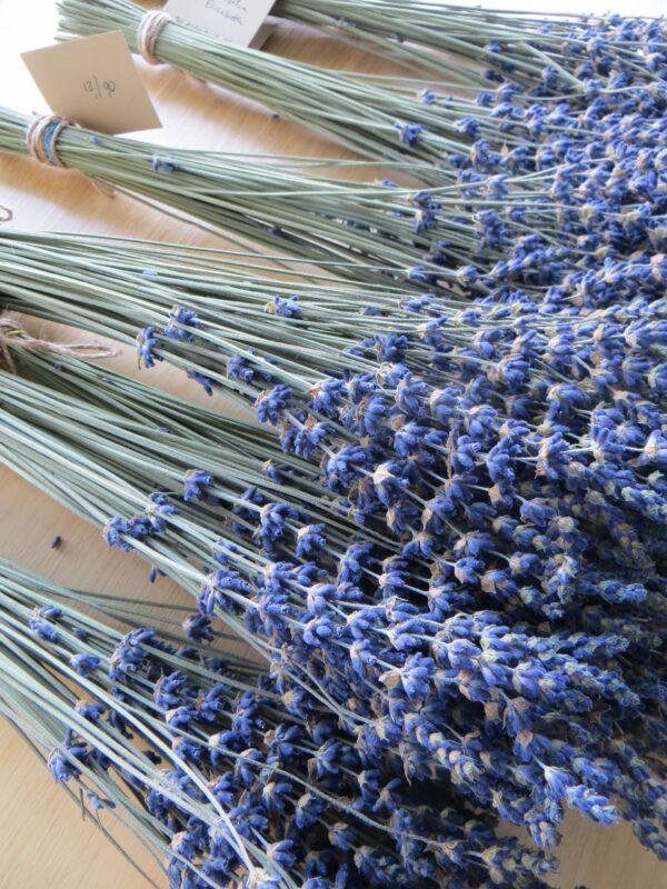 Essential.blue blue lavender