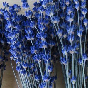lavender blue essential.blue