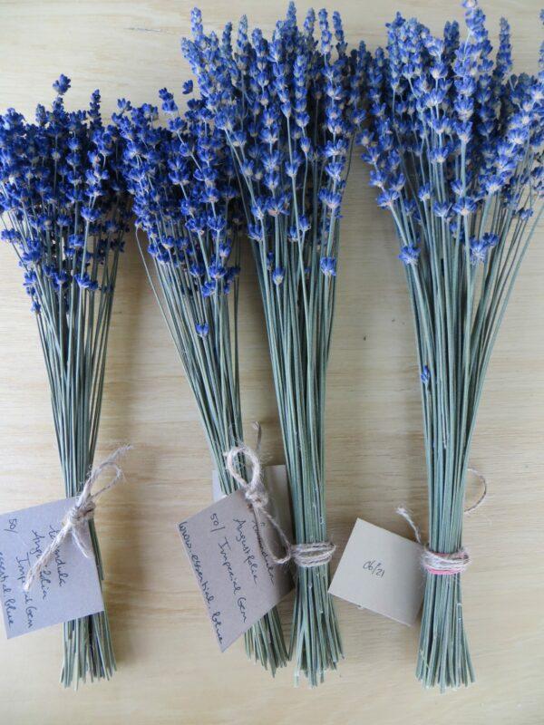 Essential.blue blue bunch of lavender