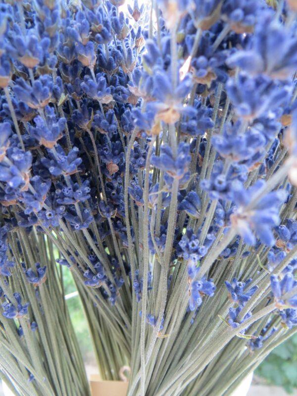 lavender bouquet in a vase