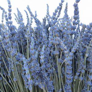 buy a bouquet of lavender lavandin