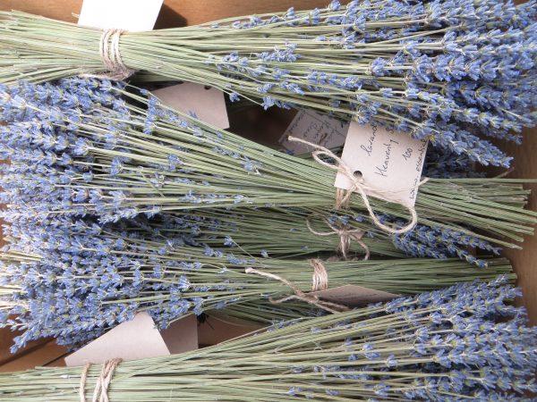 lavandin blue