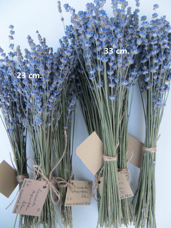lilac lavender bouquet sizes